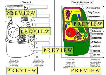 Cells 1 Plant Cell Coloring Worksheet with Questions & Answer Key