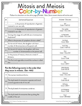 Cell Cycle Coloring Worksheet Answers