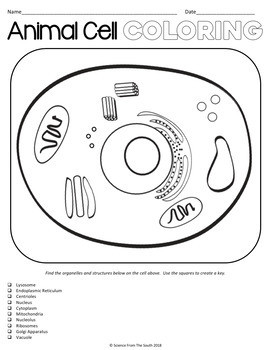 Cell Structure Coloring Worksheet