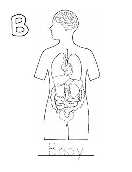 Kidney Coloring Worksheet Answers