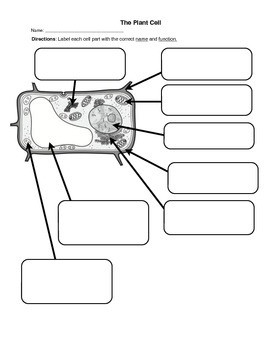 Labeling An Animal Cell Worksheet