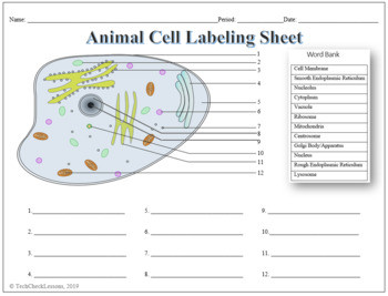 Animal Cell Labeling & Functions Science Worksheet