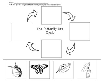 Life Cycles Of Animals Worksheets
