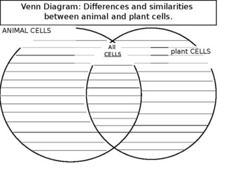 Plant Cell Animal Cell Worksheet