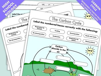 Carbon Cycle Activity Worksheet