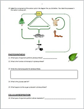 The Carbon Cycle PowerPoint Worksheet Editable