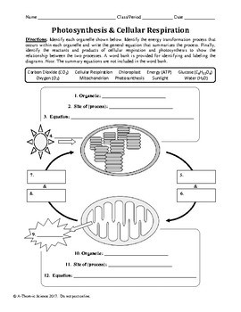 synthesis and Cellular Respiration Worksheet
