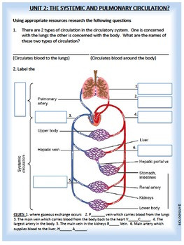 Circulatory System Activity Packet and Worksheets
