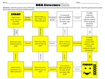 Dna Model Activity Worksheet Answers